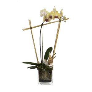4906 Flower Works website-HirdJ